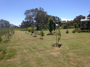 fruit-trees